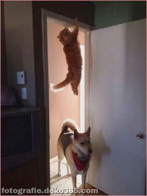 Photo of 30+ perfectly matched funny cats ~ inspiration photos