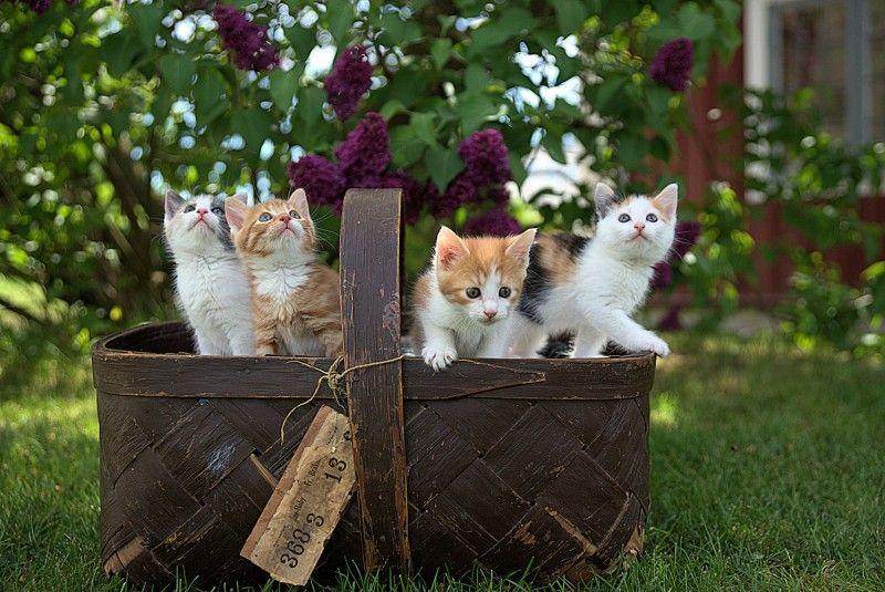اجمل الصور للقطط في العالم قطط جميلة اجمل قطة في الكون اجمل القطط المضحكة Tabby Cat Kitten Images Kittens Cutest