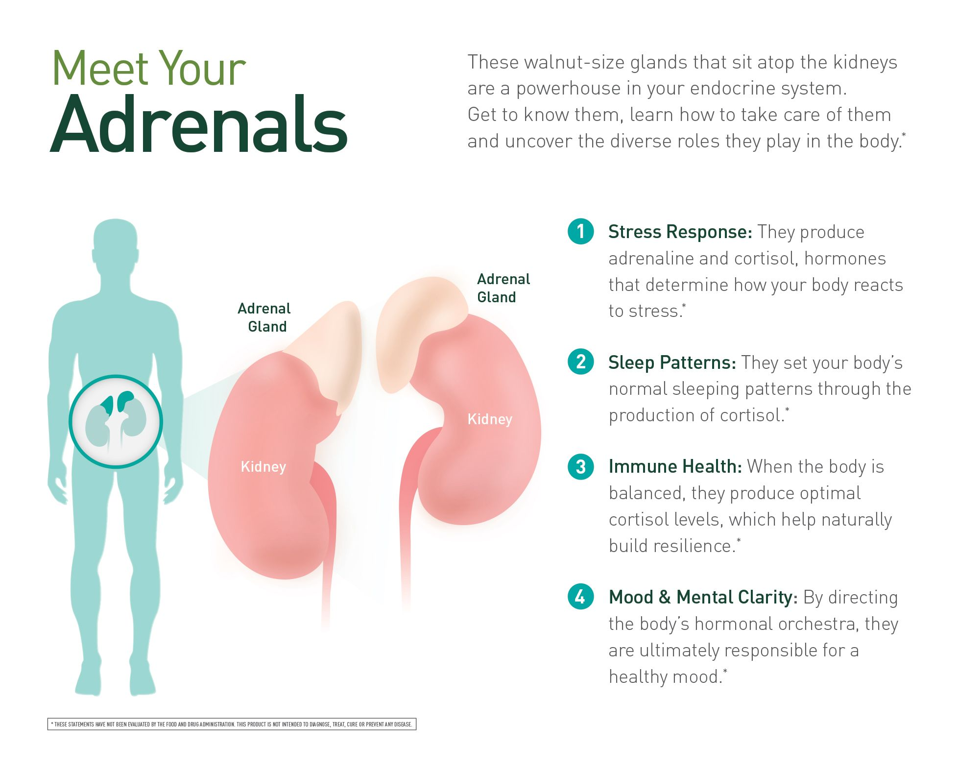 Meet Your Adrenals The Heroes Of Our Endocrine System
