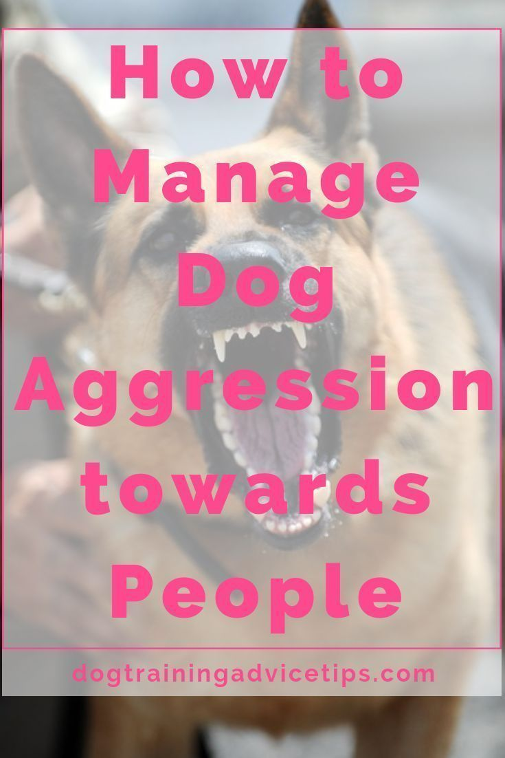 How to manage dog aggression towards people aggressive