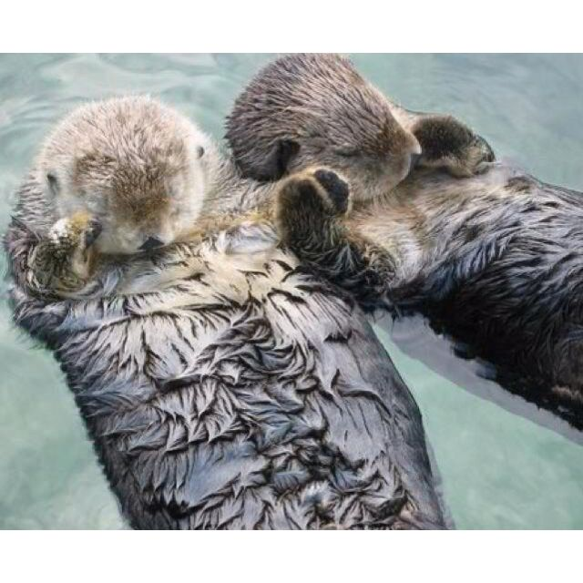 Otters hold hands while they sleep so they don't drift apart from one another. :) <3
