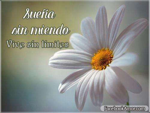 Frases Lindas Para Facebook: Imagenes Con Frases Bonitas Para Facebook