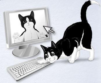 Susse Katzenbilder Gibt Es Auch Bei Katzen Wie Felix Ich Habe
