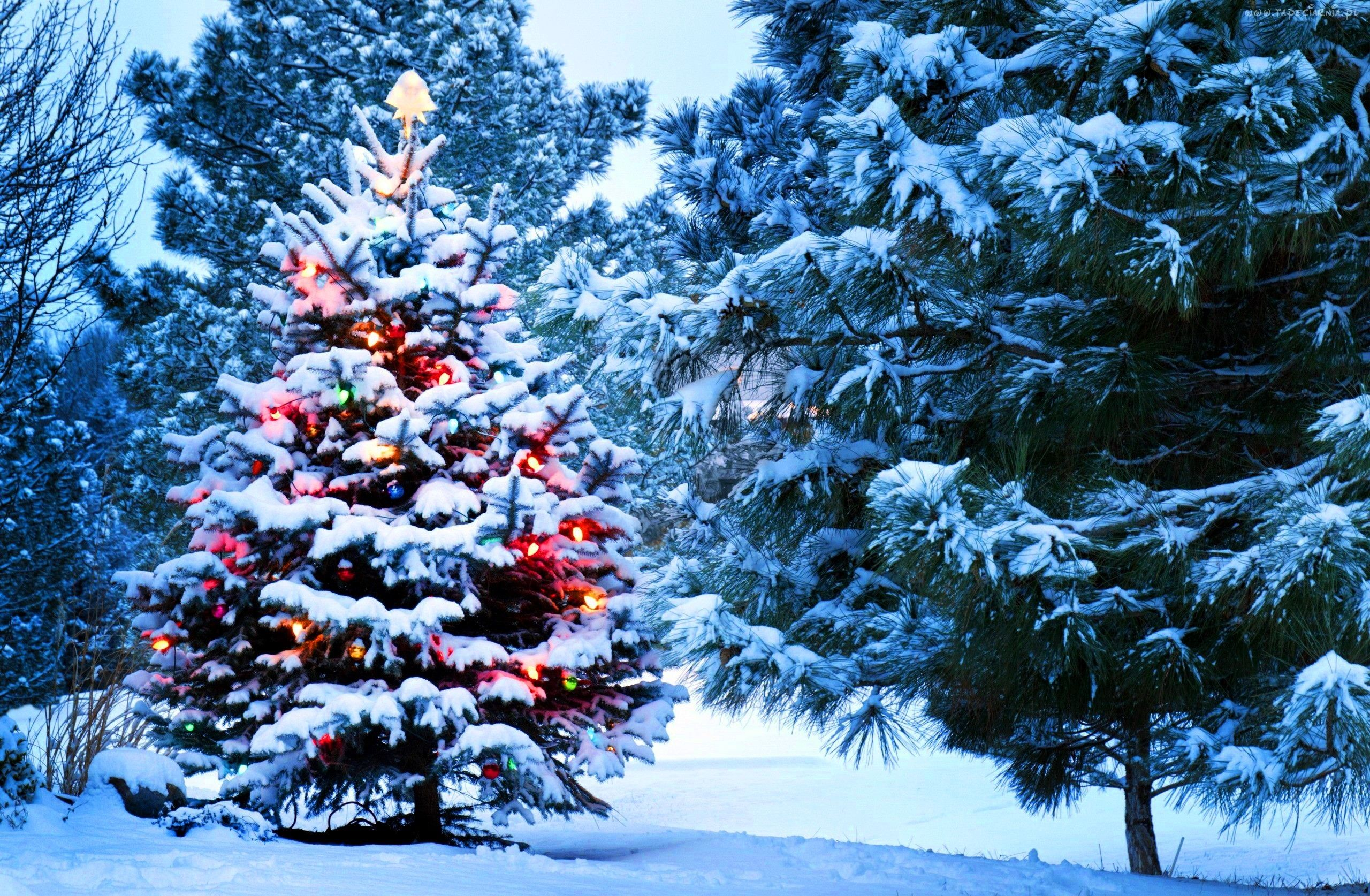 Top Christmas Tree Hd Wallpapers #Followme #Cooliphone6Case On #Twitter #Facebook