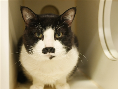 Oreo is atrisk of euthanasia and needs placement. Please