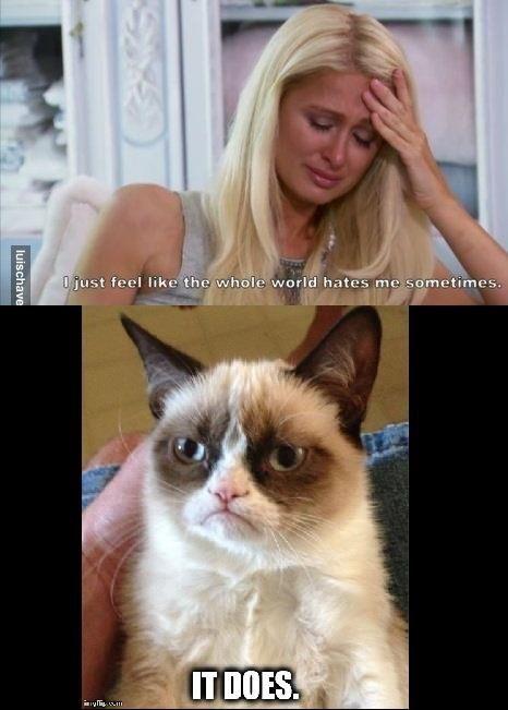 Grumpycat Meme For More Grumpy Cat Stuff Gifts And Meme Visit Www Pinterest Com Erikakaisersot Cat Jokes Grumpy Cat Humor Grumpy Cat Quotes
