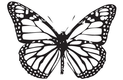 25948 Kb Pdf Monarch Caterpillar Coloring Page Butterfly