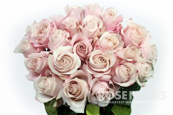 Wholesale Blush Roses - 100 stems or more - 100 Stems