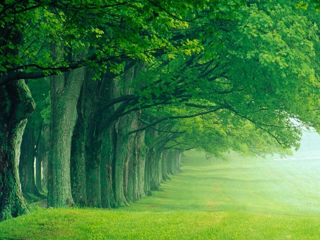 imagenes de naturaleza para fondo de pantalla en hd gratis