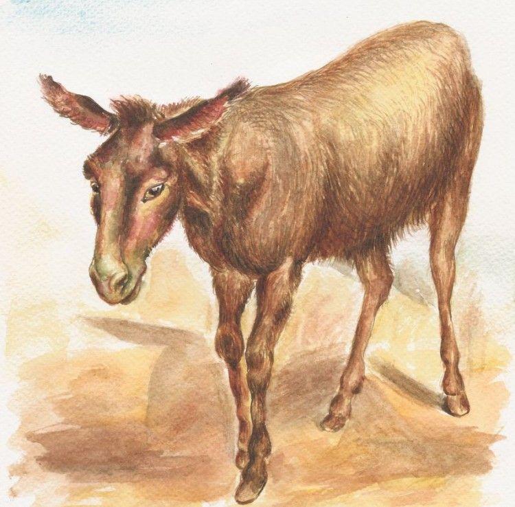 the donkey gk chesterton