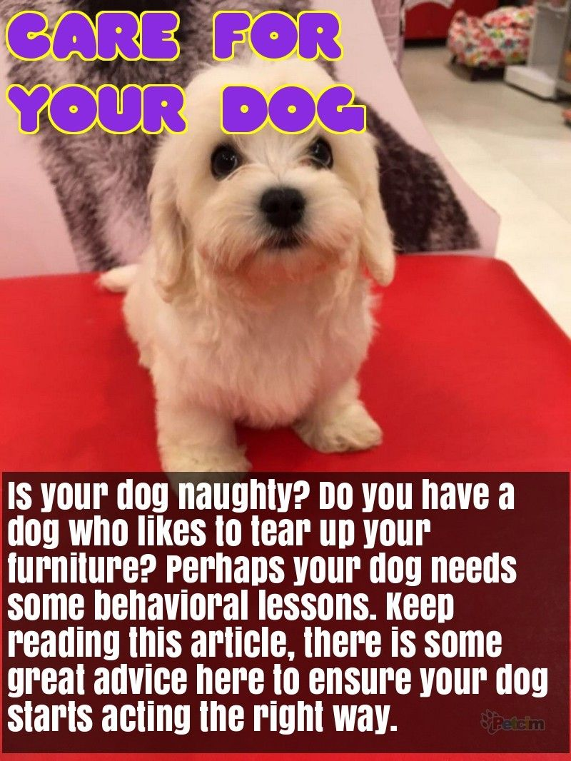 Great Tips About Dogs That Anyone Can Use Dogs Pet Care Dogs Dog Training Obedience