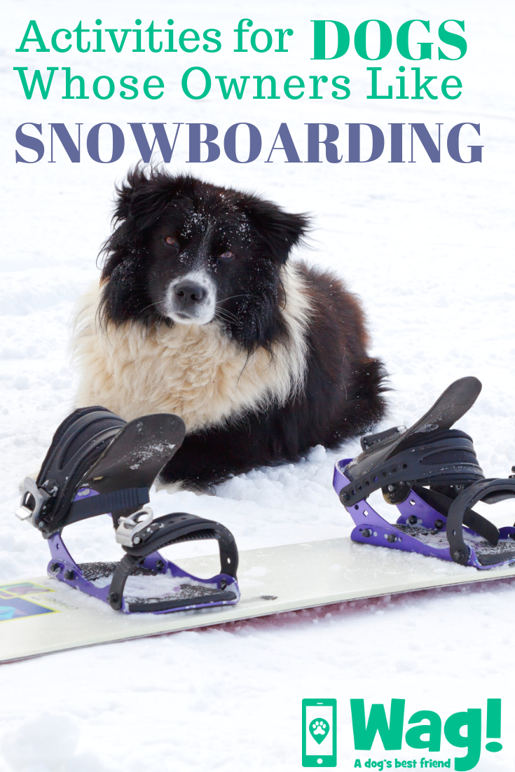 Top Activities For Dogs With Owners Who Like Snowboarding Wag Dogs Dog Best Friend Dog Activities