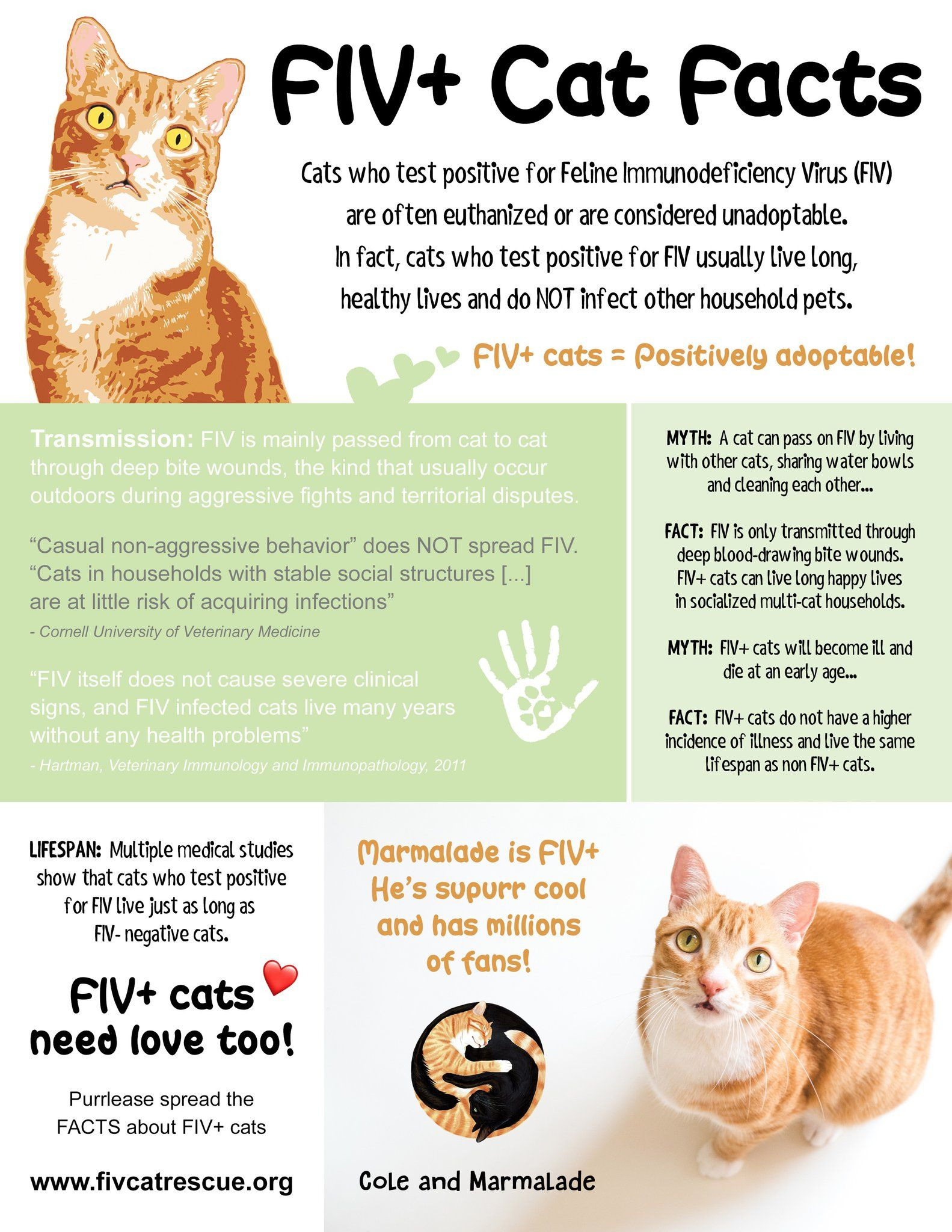 Cole Marmalade On Twitter Cat Facts Cats Cat Adoption