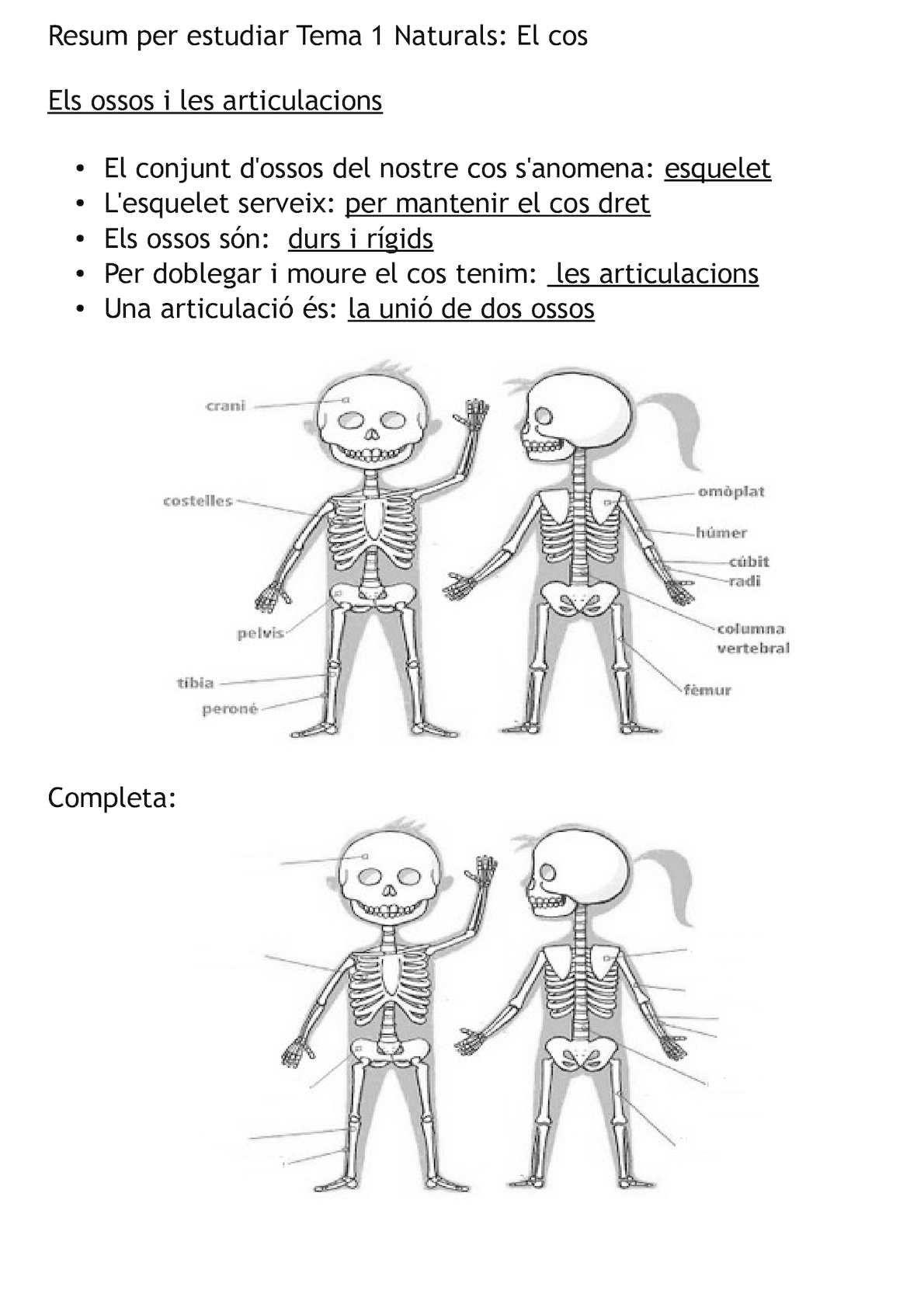 Resum Per Estudiar Tema 1 Naturals El Cos Els Ossos I Les  # Muebles Begonazpi