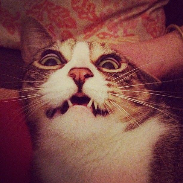 Monster kitty!