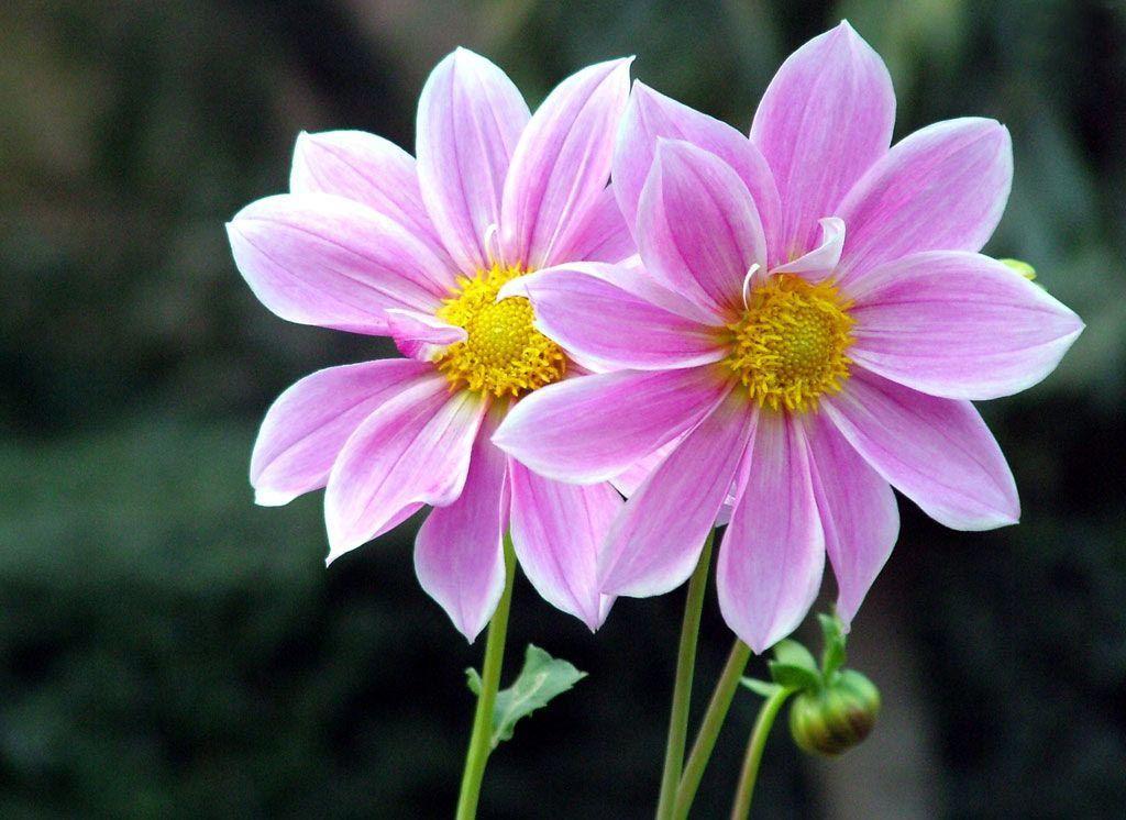 Conhecido Lista de Nomes de Flores | Lista de nomes de flores, Lista de  UZ39