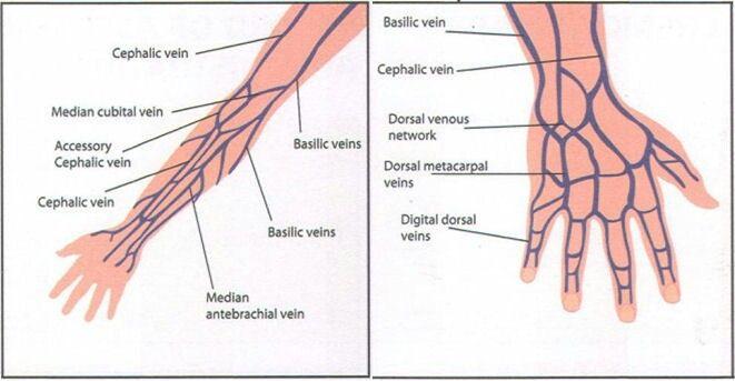 ddec iv wiring diagram iv insertion sites   nclex   iv insertion, hand veins, arm ... #10