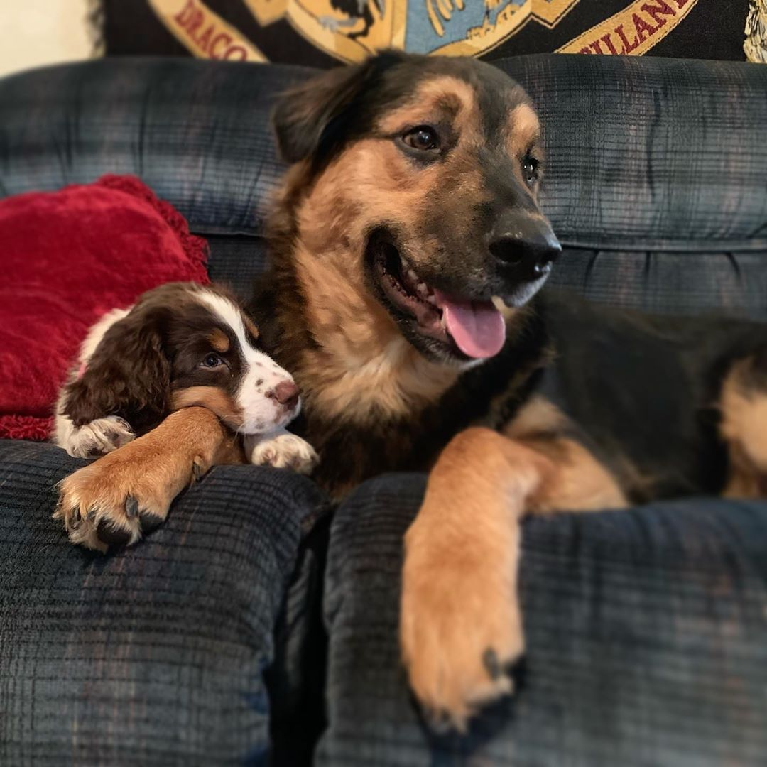 I got to have a new playmate over this weekend! He's my best buddy now!