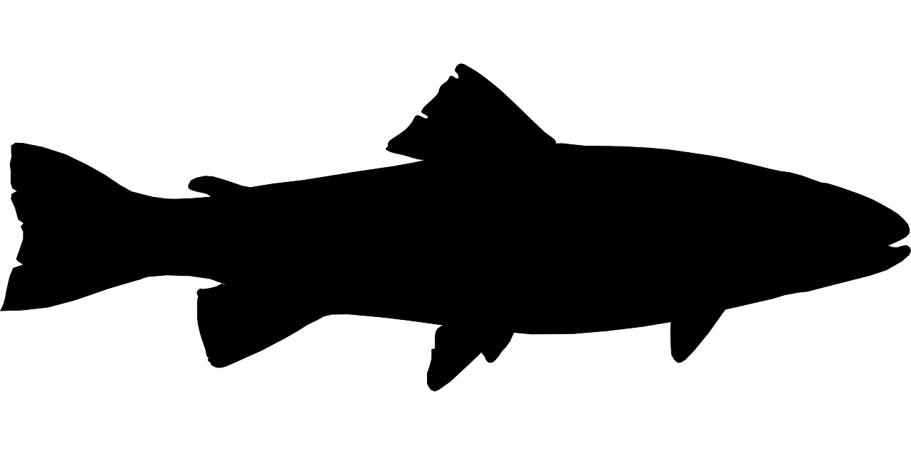 Fish outline silhouette. Free image on pixabay