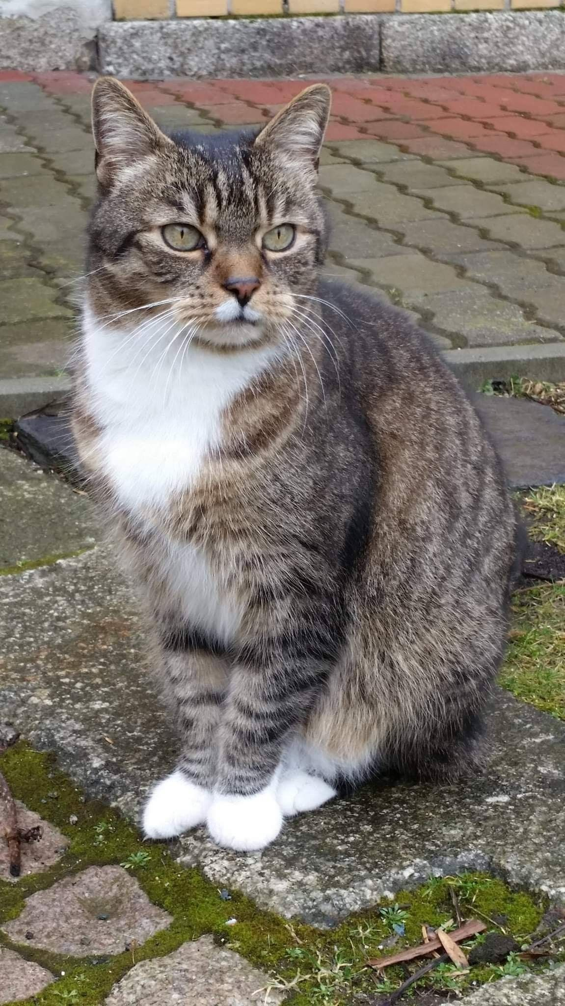 Pin By The Pawz Lab On Cats Tabby Cat Beautiful Cats Cats