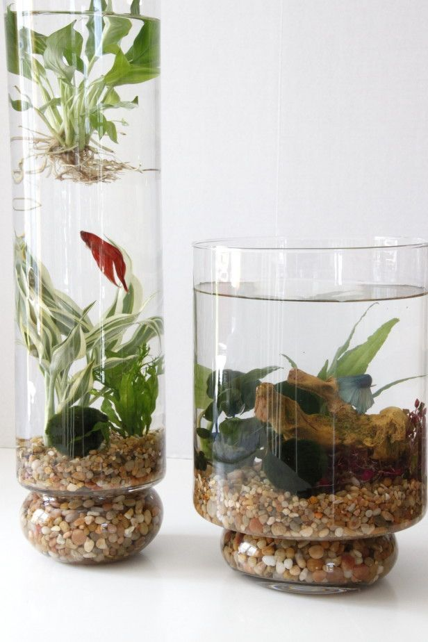 Learn how to create an indoor water garden featuring aquatic plantings  complete with betta fish from HGTV Gardens. - Create An Indoor Water Garden --> Http://www.hgtvgardens.com