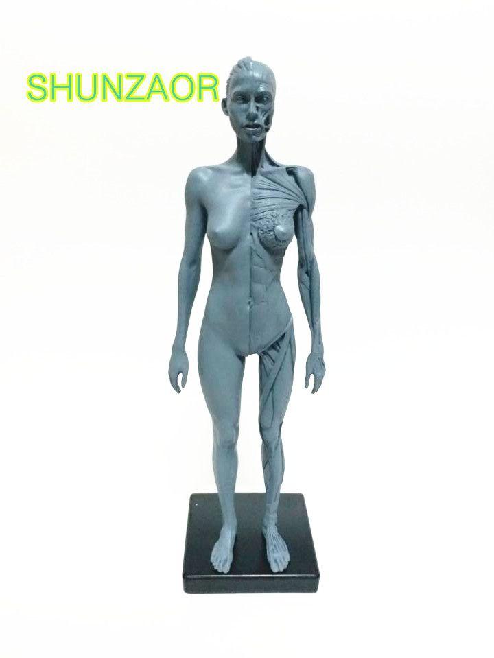 30cm Human Female Model Anatomy Skull Head Muscle Bone Medical ...