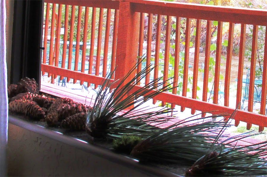 pine cones and pine stems after a mountain rain, drying on the windowsill