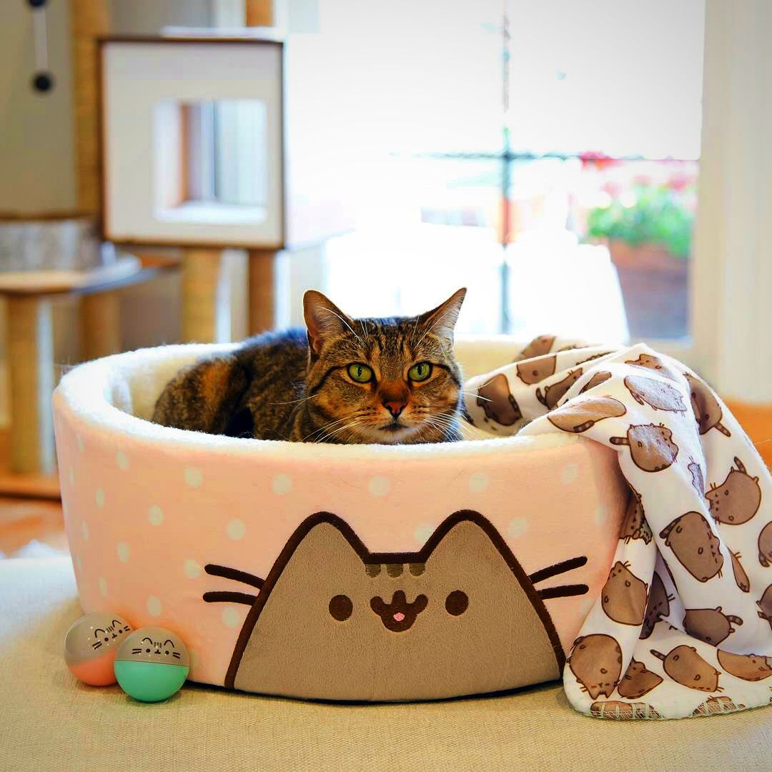 Pusheen cat bed. Looks comfy Gattini, Animali