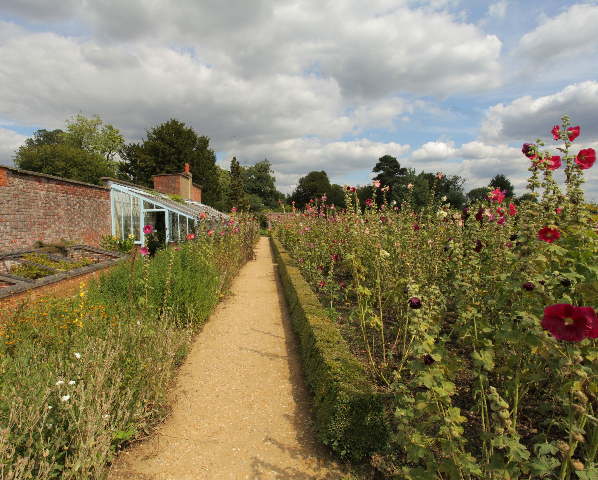 Up the Garden Path | Pinterest | Charles darwin, Hollyhock and ...