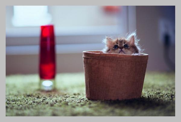 World Cutest Kitten