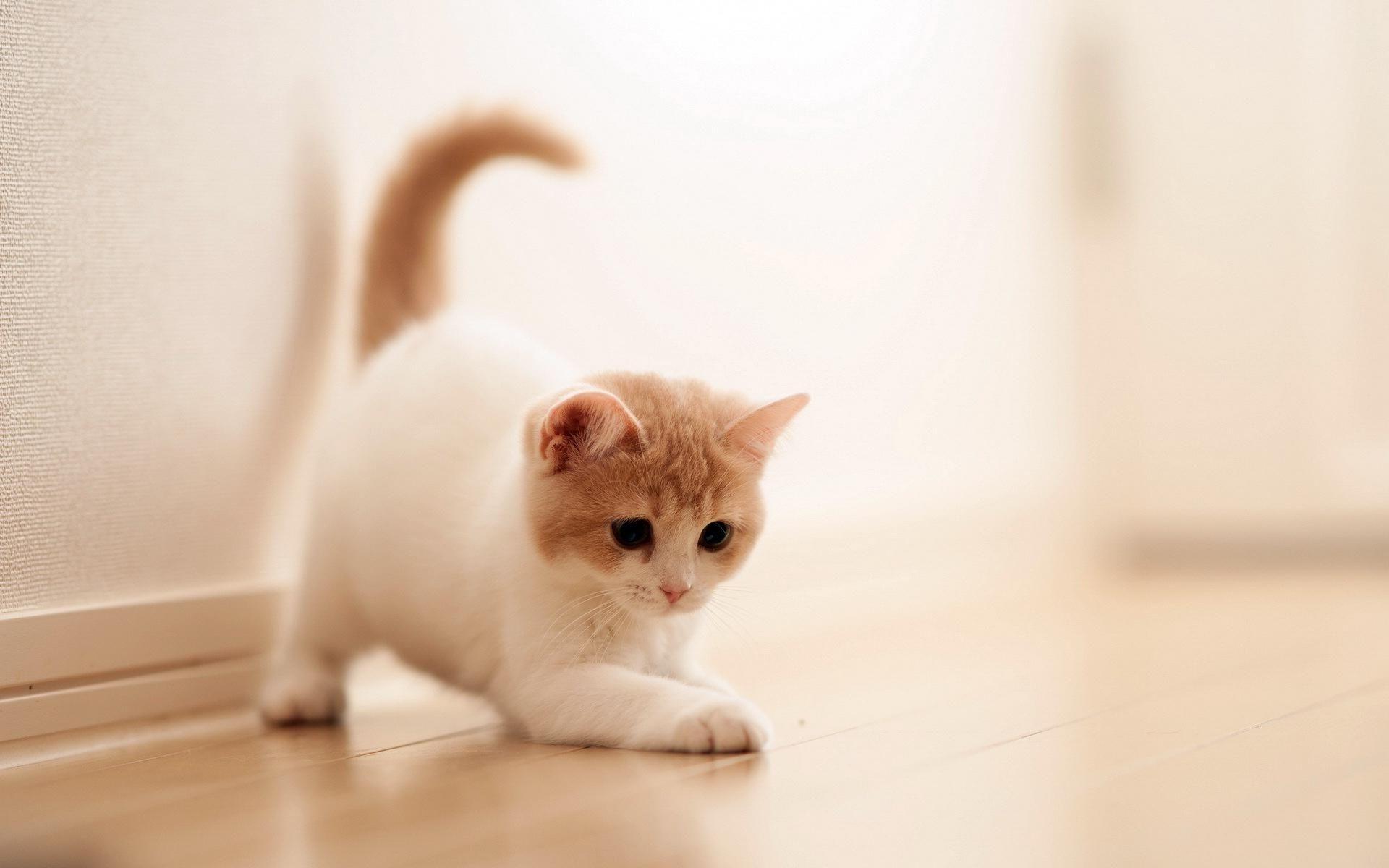 HD Free Cat Wallpapers HD Images New × Cat Hd Wallpaper