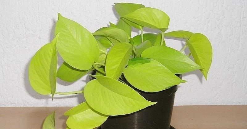 La nasa alerta estas son las 5 mejores plantas de - Plantas de interior que purifican el aire ...