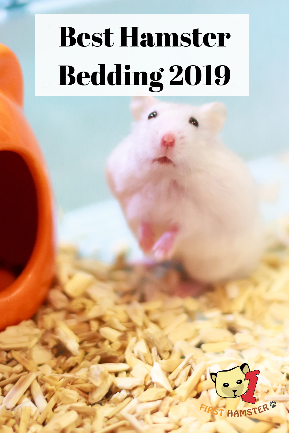 Best Hamster Bedding/Substrate Options 2019 We'll look