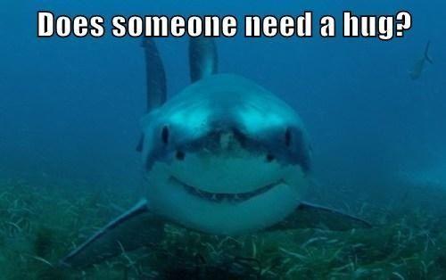 Woody and shark meme