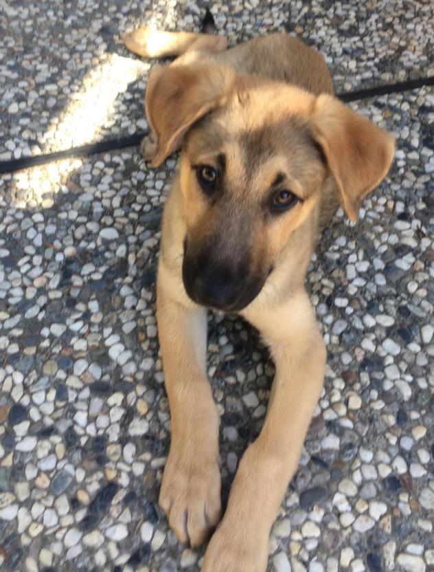 Adopt Riley On German Shepherd Dogs Dogs Pets