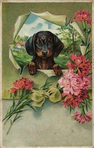 Vintage Dachshund Postcard Vintage Dachshund Dachshund Art