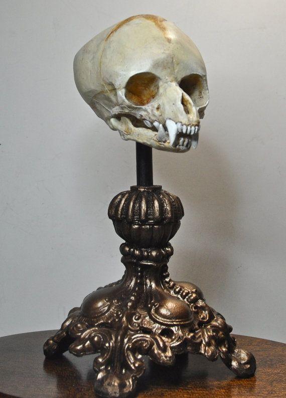 Fetal Werewolf Skull Display von Dellamorteco auf Etsy