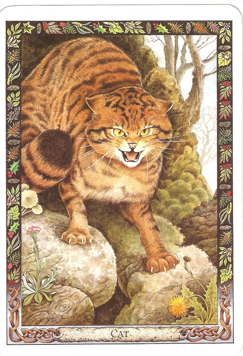 Druid Animal Oracle By Carr-Gomm Cat, Druid; Animal; Tarot