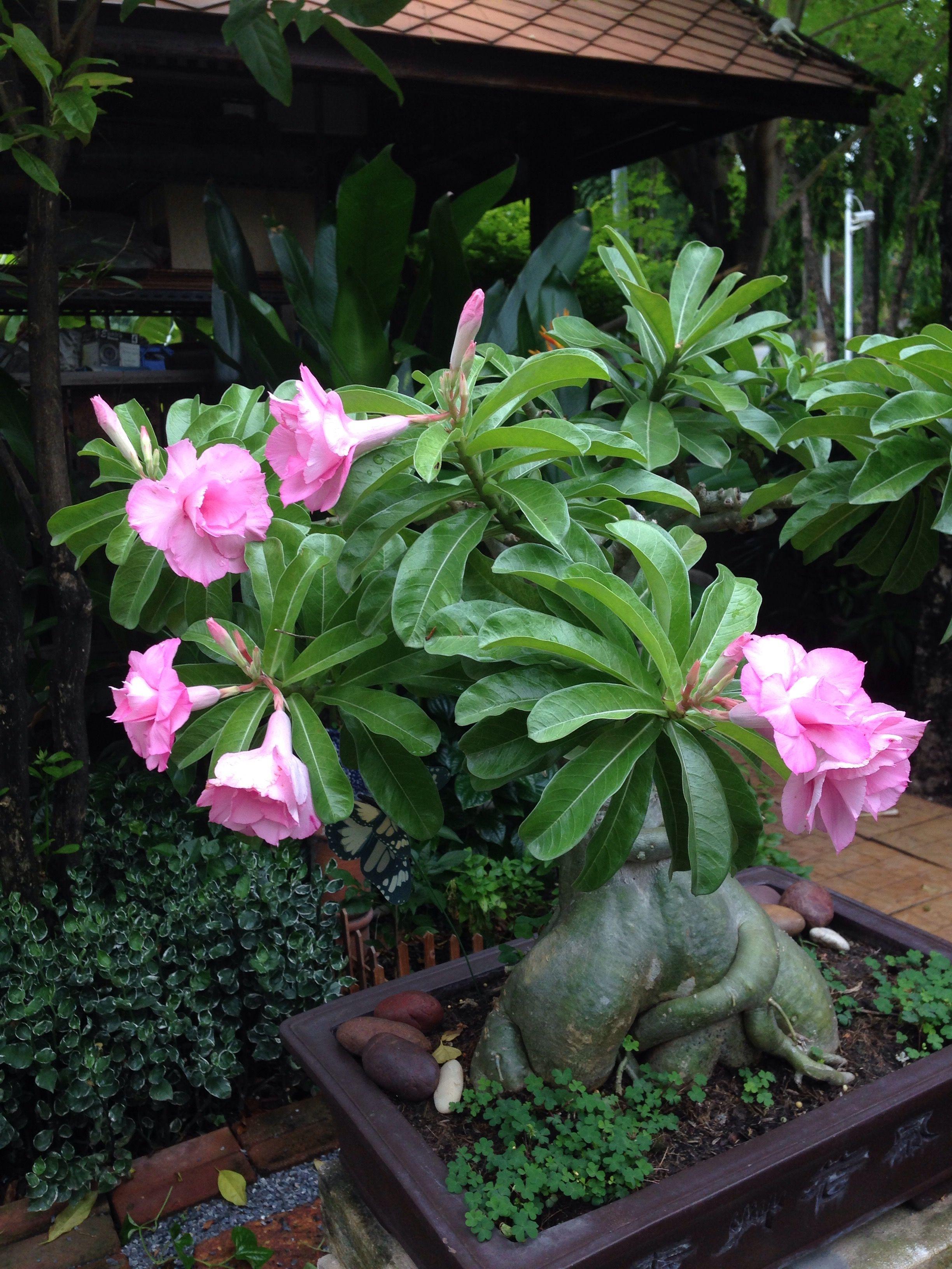 ปักพินโดย Claudia Mekunwattana ใน Garden in me