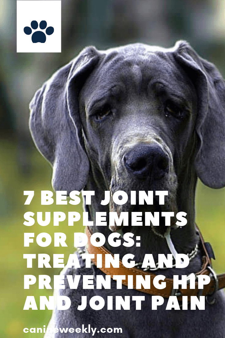 7 Best Joint Supplements for Dogs in 2020 Joint