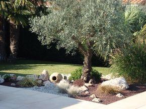 massif autour d 39 un olivier jardin pinterest jardins. Black Bedroom Furniture Sets. Home Design Ideas