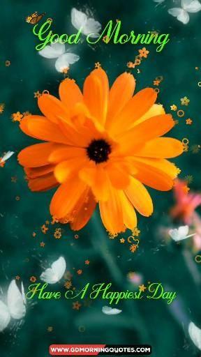 Amazing Good Morning Flowers Video, Good Morning Video, Flowers