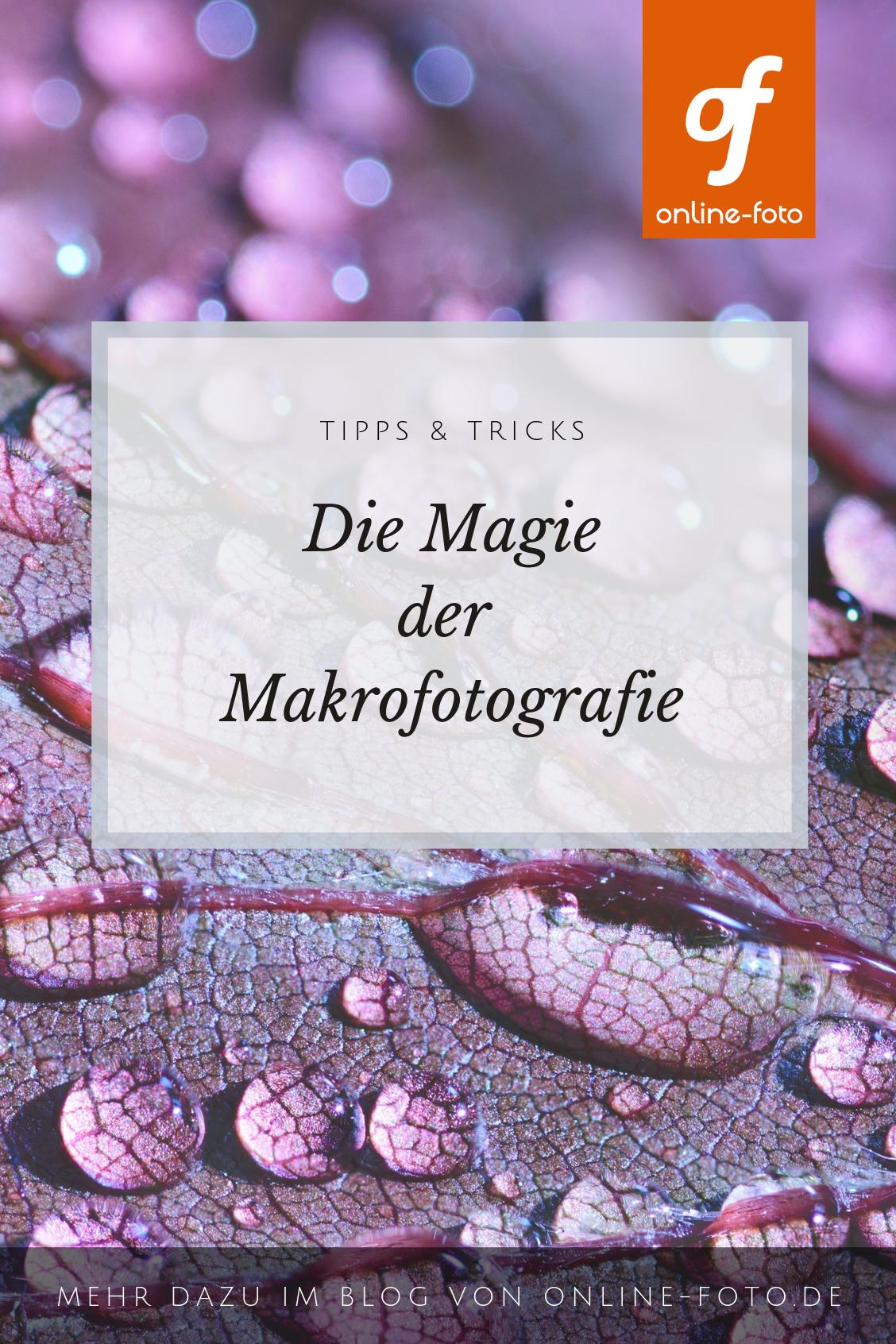 Die Magie der Makrofotografie