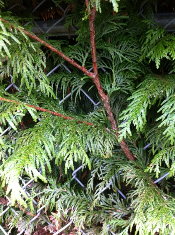Free Plant Identification (With images) Tree leaf
