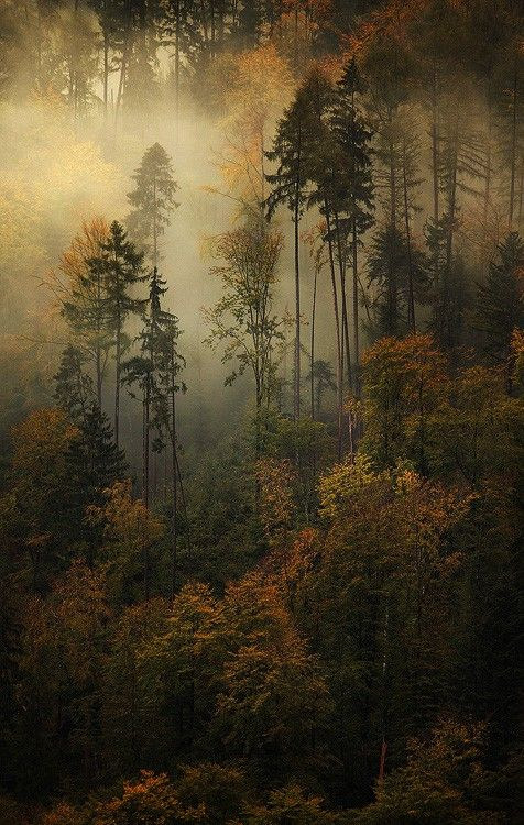 | quiet wood…wherever this is…. via Barbara... #beautifulnature