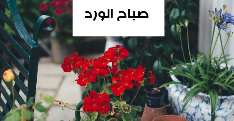صباح الفل والياسمين مسجات رومانسية للحبيب والزوج In 2021 Light Box Plants Light