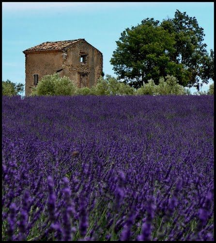The scent of wild lavender.