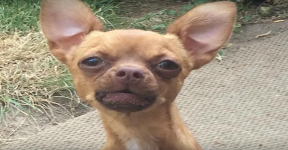 AllTerrain Chihuahua Models Latest In Wheel Wear