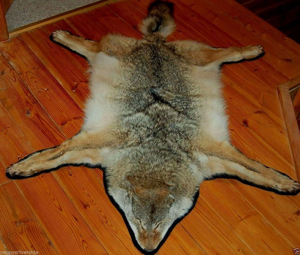 Coyote Fur Rug Mount Brush Wolf Cabin Lodge Claws Pelt Hide Taxidermy Nice