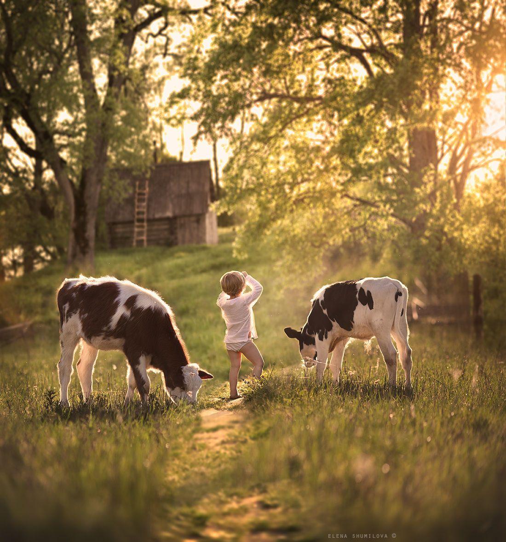 ..morning at the farm.. by Elena Shumilova